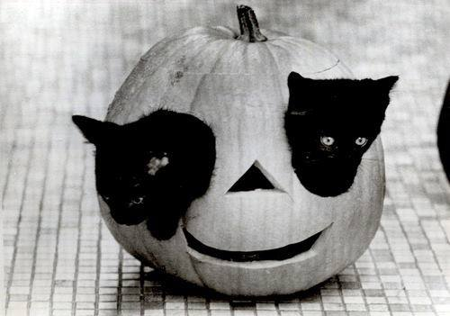 Pumpkin-cats