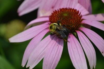 Polinators