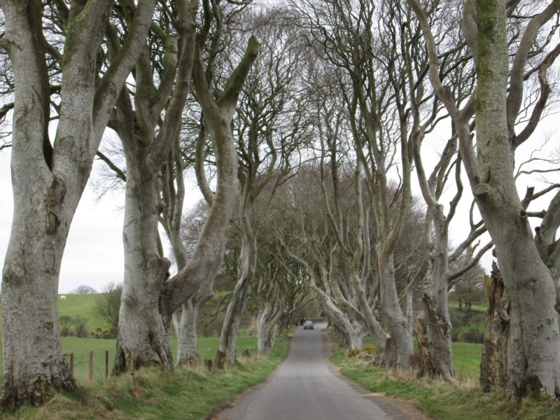 Dark Hedges is one of the Game of Thrones Film Locations in Northern Ireland