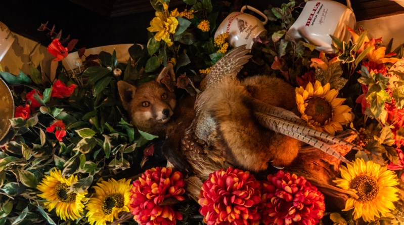 Taxidermy fox inside Hole in t' Wall pub in Bowness-On-Windermere in the Lake District, UK