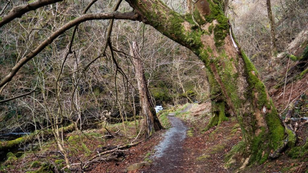 Uig Woods in Uig, the Isle of Skye in Scotland