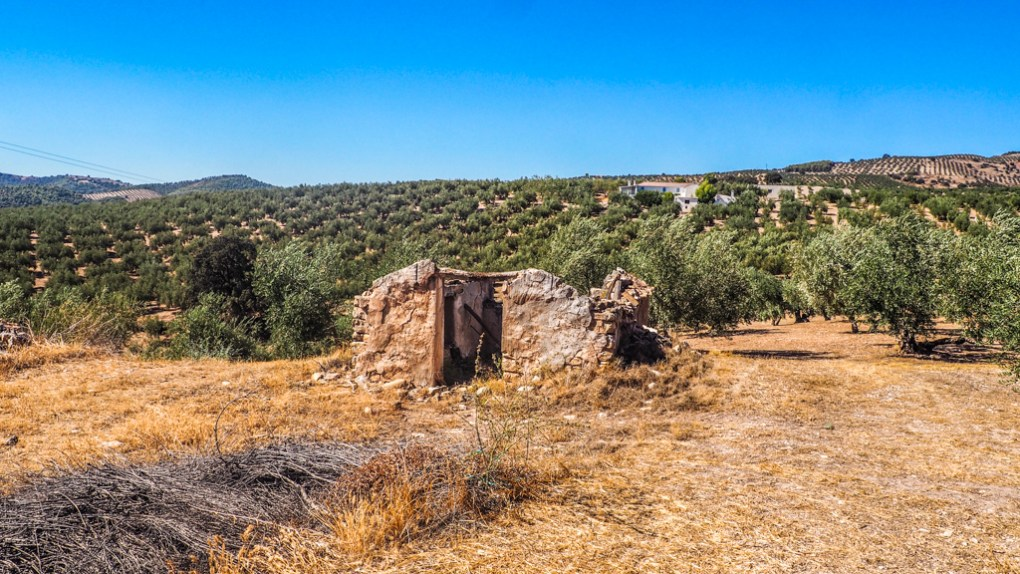 Ruins and olive groves in Granada, Spain