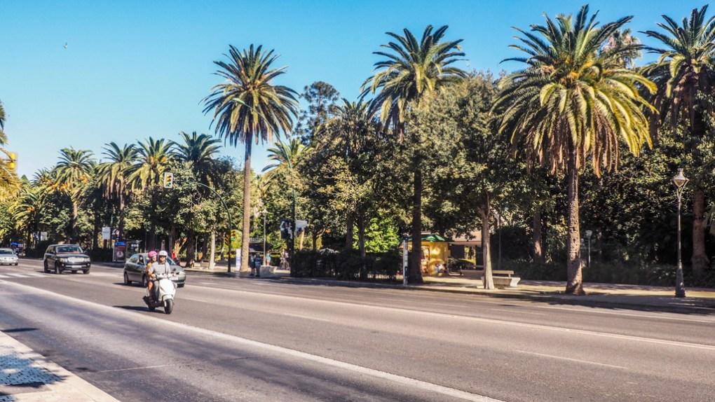 Vespa riding down a palm tree lined road in Málaga, Spain