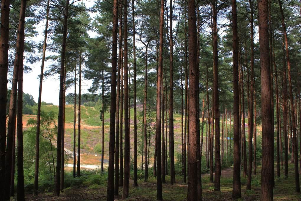 Bourne Wood in Farnham, Surrey in England Gladiator Filming Location