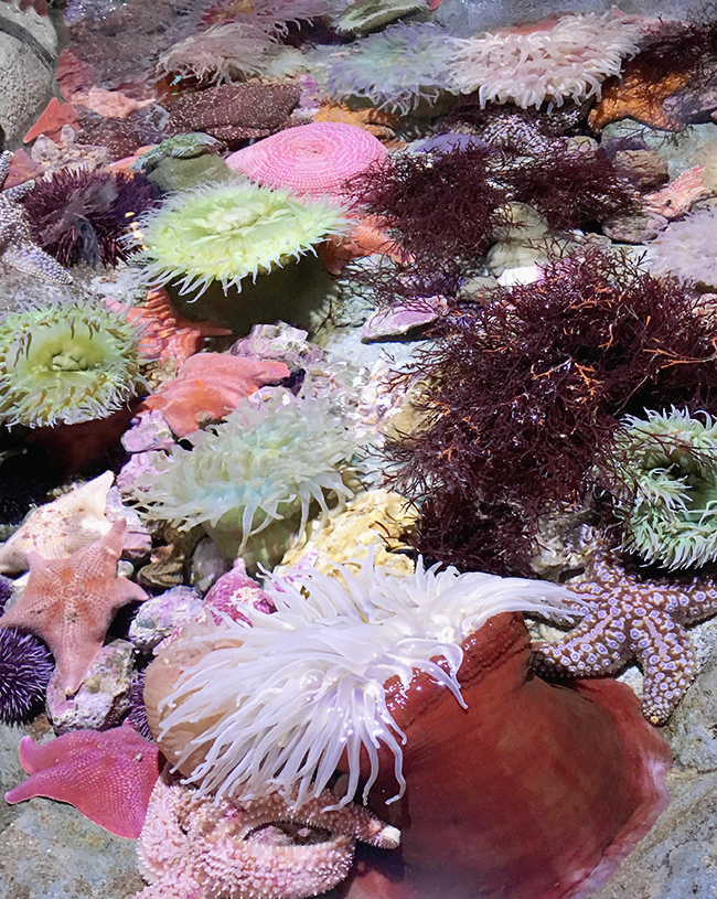 aquarium of the pacific in long beach | almost makes perfect