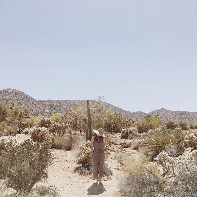 guide to joshua tree, california