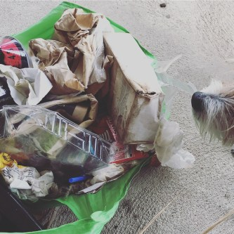 Another walk with the dogs, another bag of trash. One day I'll tip one out and do a trash autopsy on the blog!