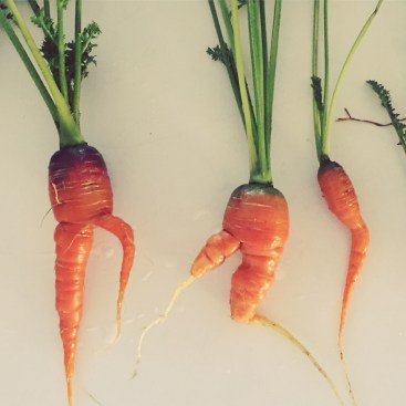 My carrots are dancing - is this because I sang to them?!