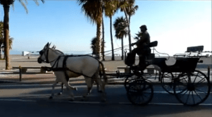 Horse and Carriage Almunecar