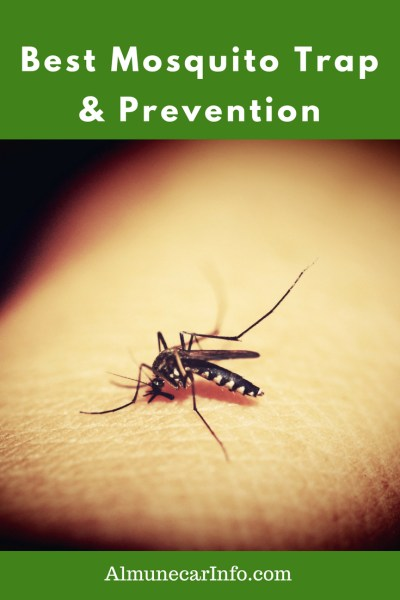 Best Mosquito Trap 2020 Best Mosquito Trap & Prevention   Almuñécar Info