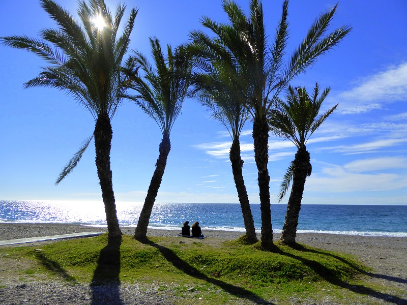 Palm Tree Islands La Herradura