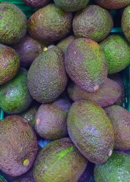 There are two types of avocado grown locally.  The Haas avocado is in season from November to January.  This has a thicker bumpier skin.  While the Avocado granel is available year-round and has the thinner lighter skin.  In the  Granada province, on the Costa Tropical, 20 million kilos of avocados are produced each year!