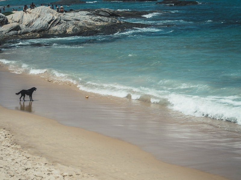 More Dog-Friendly beaches in Andalucia