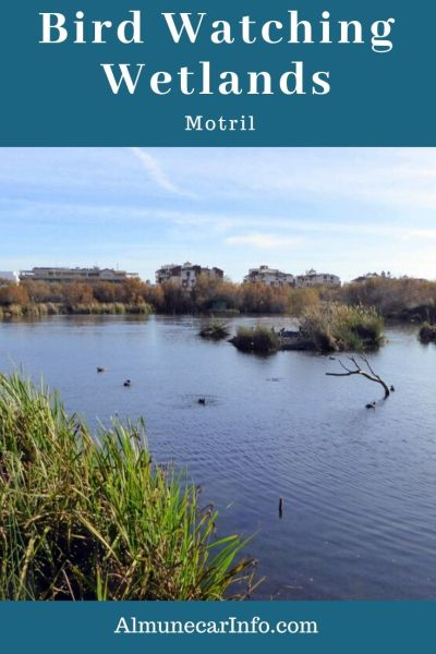 Enjoy a day ou bird watching at Charca de Suárez in Motril. This is the most important wetland on the coast of Granada, with birds, wildlife, & vegetation. Read more on Almunecarinfo.com