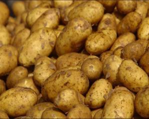 طلب إحاطة في البرلمان بسبب أزمة البطاطس