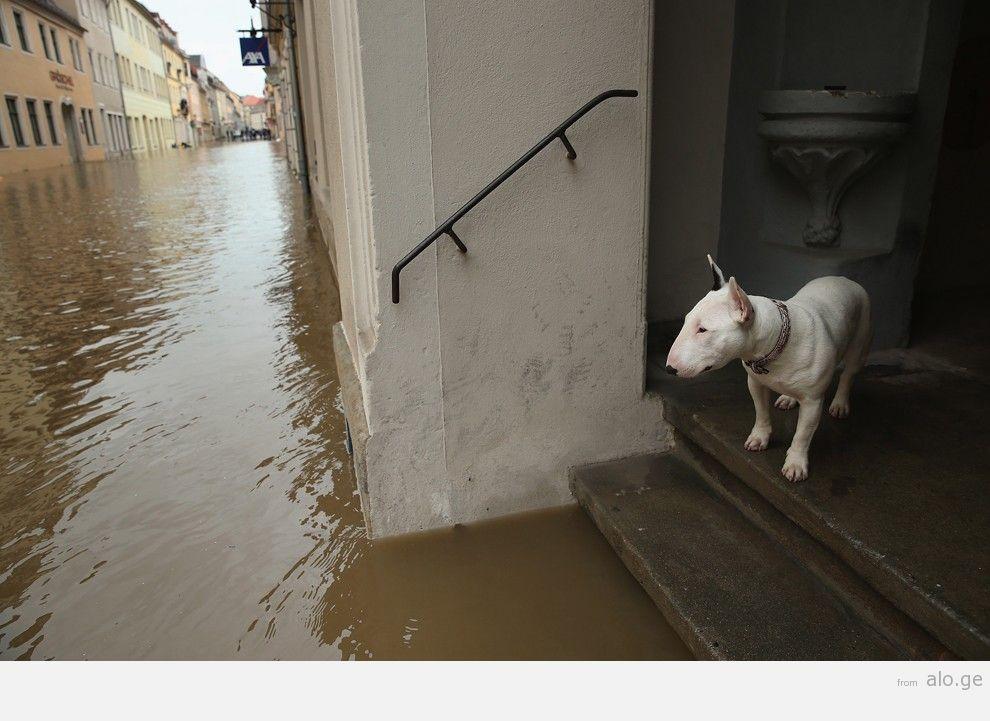 flooding31