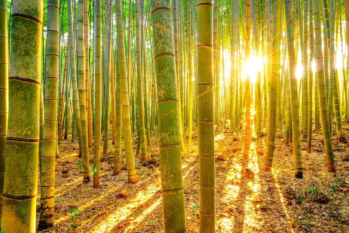 soin visage bambou