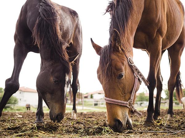 compléments alimentaires transit cheval