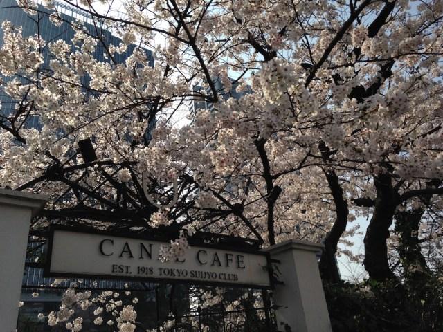 神楽坂カフェ(カナルカフェ、桜)