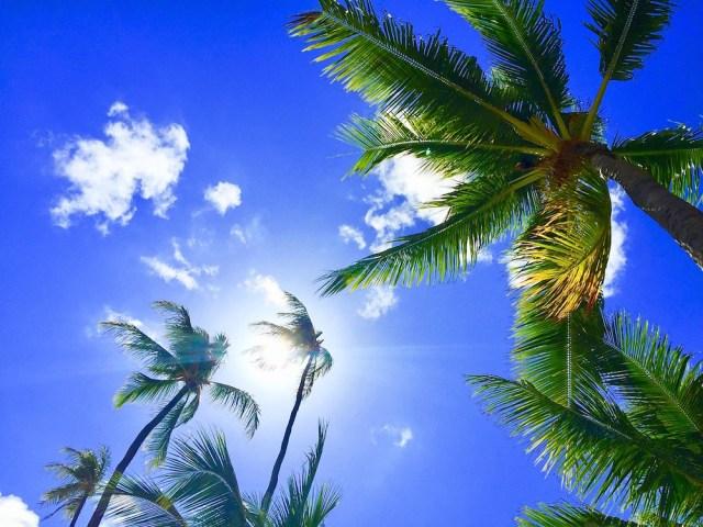 ハワイのヤシ
