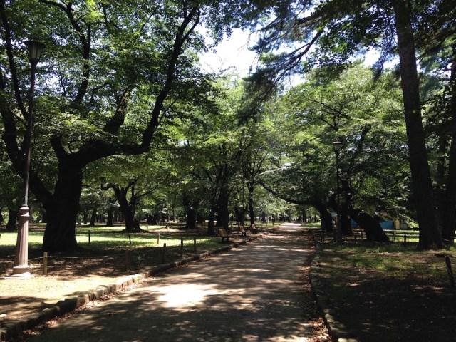 大宮公園(遊歩道3)