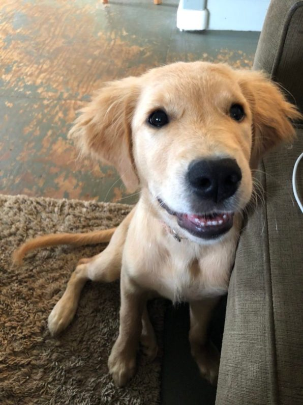 kauai-island-puppy