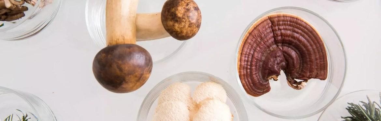 medicinal mushrooms, bulk mushrooms