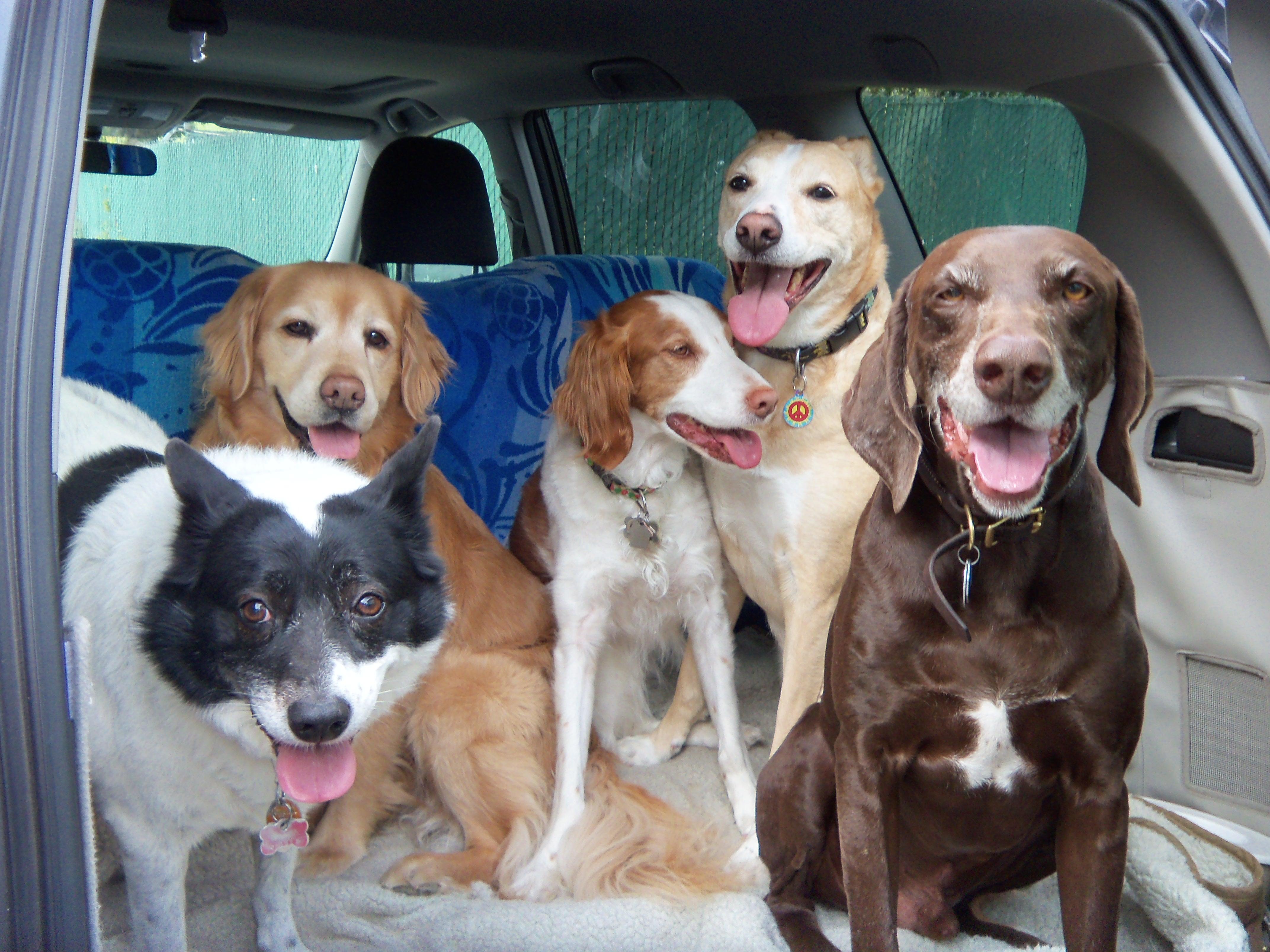 dog-social-group-car