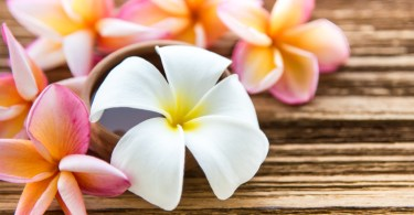 Soft focus and blur background Plumeria flower on wood table