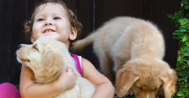 Happy child play and hug family pet - labrador puppy