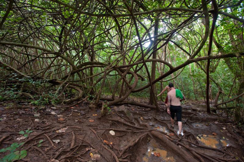 150 Things To Do On Oahu - Maunawili Falls.