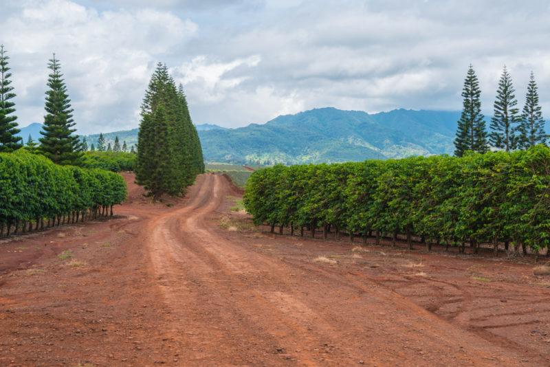 150 Things To Do On Oahu - Coffee farm.