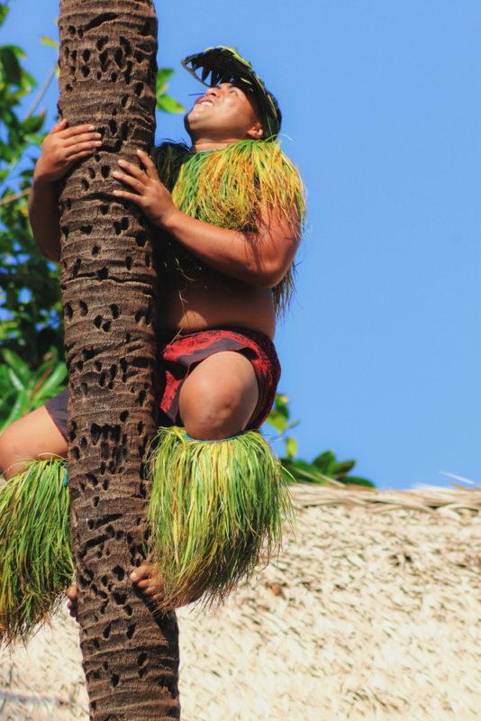 Polynesian Cultural Center climbing a coconut tree.