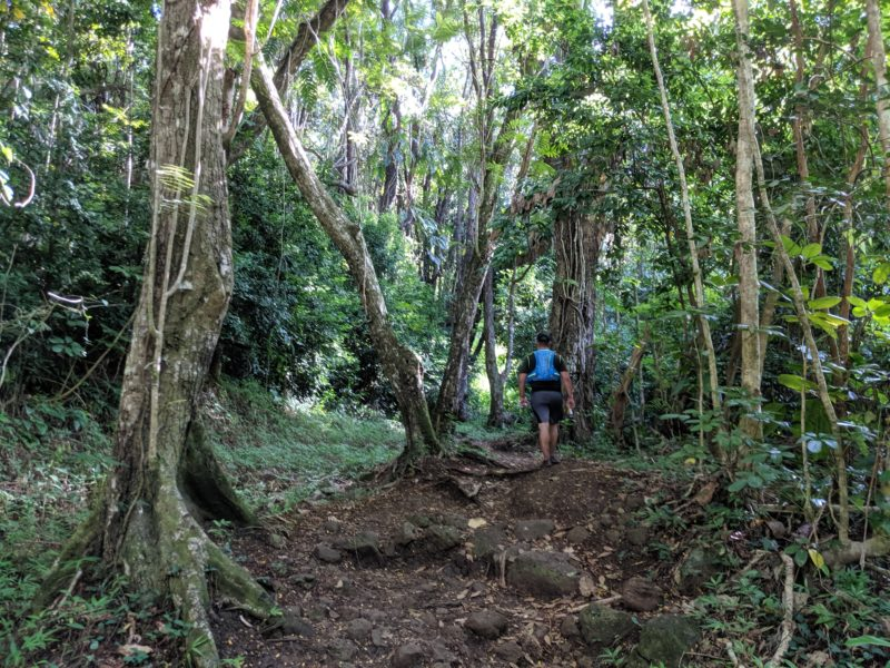 Hiking through the rainforest on the Makiki Valley Loop Trail.