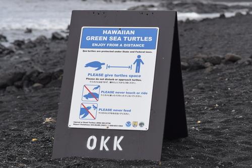 Punaluu Black Sand Beach For Green And Hawksbill Turtles