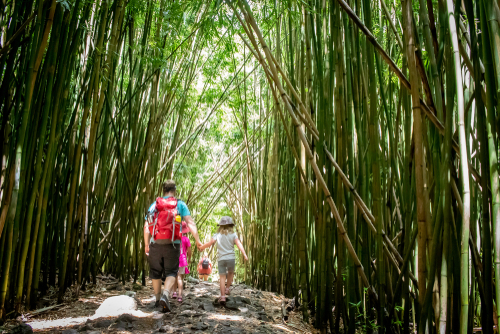 A Dad and daughter hold hands as they walk through the bamboo forest in the Pipiwai Trail in Haleakala National Park.