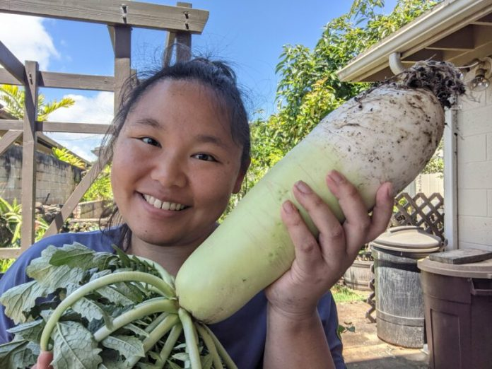 My 6th daikon harvest was another success!