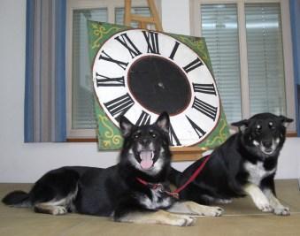 Gizmo und Laika waren immer dabei und achteten auf die Öffnungszeiten der Ausstellung