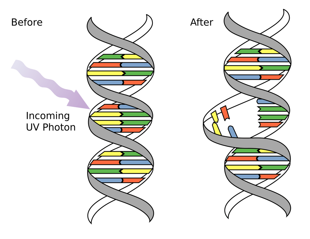 Dna Structure And Mutations
