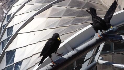 Vogel auf Zugspitze