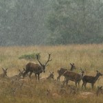 Crowned animals in heavy rain