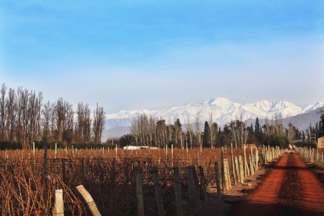 Mendoza travel guide via A Lo Wine me: a travel guide to Mendoza, Argentina featuring tour information, where to stay, where to eat, travel tips, and more. (www.aloprofile.com)