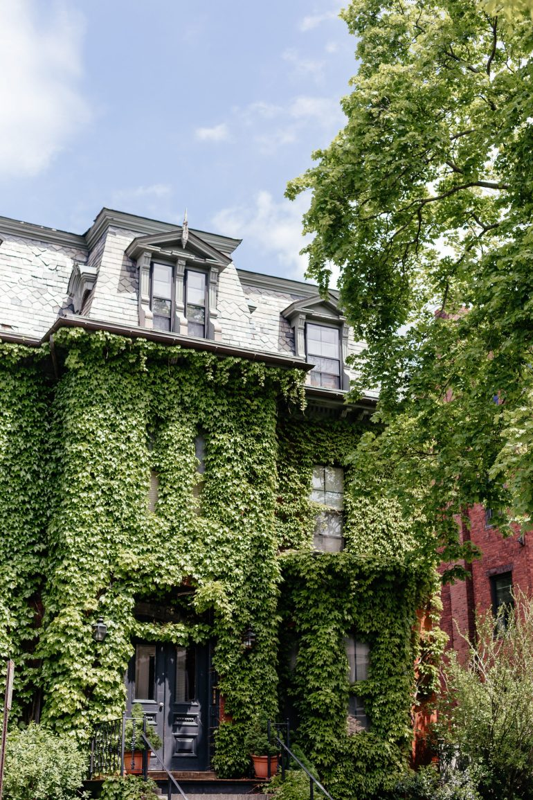 Ivy Covered House in Cambridge, MA near Harvard's campus via A Lo Profile's Boston Travel Guide