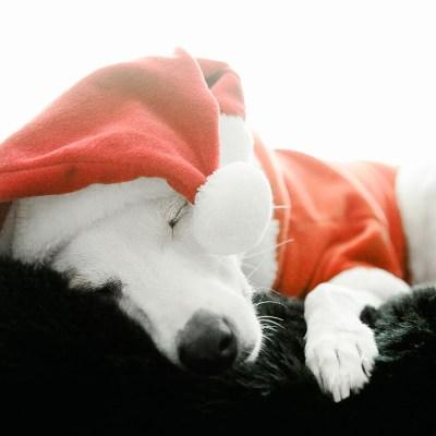 Santa Dulce