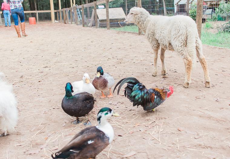 love mama series farm adventure