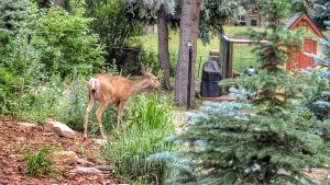 Doe by the Waterfall
