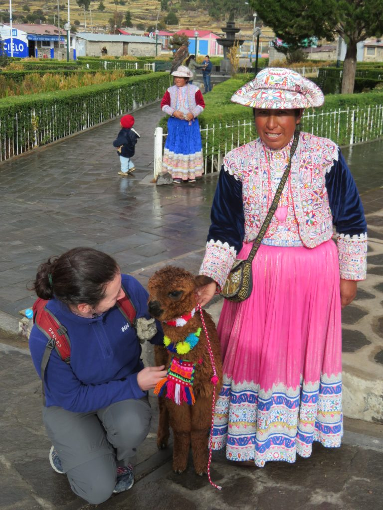 Visiting the Colca Canyon: Alpaca