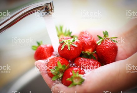 Unrecognizable adult caucasian woman holding handful of fresh strawberries and washing under running water from kitchen tap. Strawberries were hand picked by model one hour before shooting.