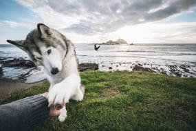 The Rise Of Loki The Wolfdog And His 1.8 Million Instagram ...