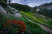 Clint_Losee_LakeCatherineTrail-0006